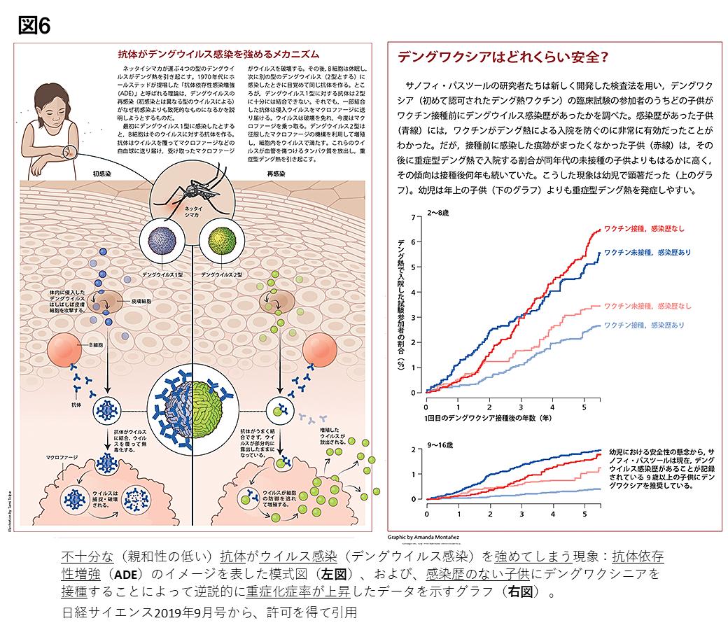 抗体 依存 性 免疫 増強